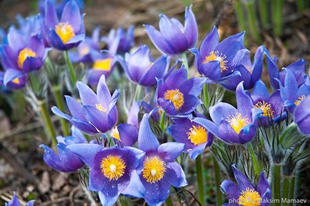 Захотели букетик первоцветов – готовьтесь заплатить штраф