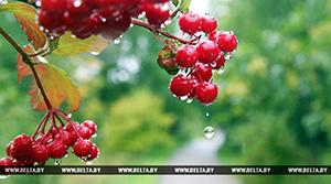Дождливая погода ожидается в Беларуси на этой неделе