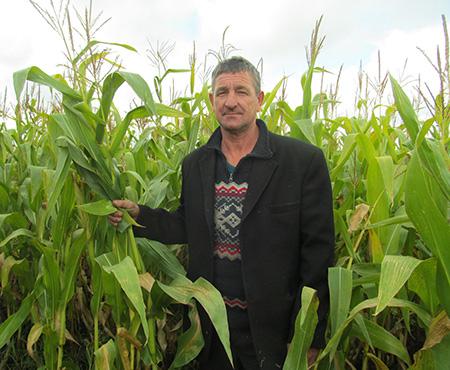 В Шумилинском районе под кукурузой занято 2133 гектара
