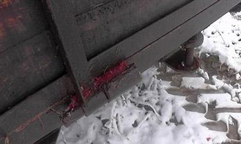 По кровавым следам в Шумилинском районе задержали браконьера