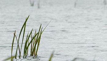 Десятиклассник утонул в реке Прудок