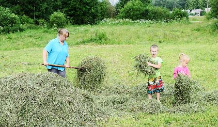 Буржинские всей семьёй сушат сено на двух коров