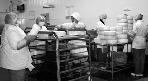 Шумилинские сыроделы готовят сыры по итальянской технологии