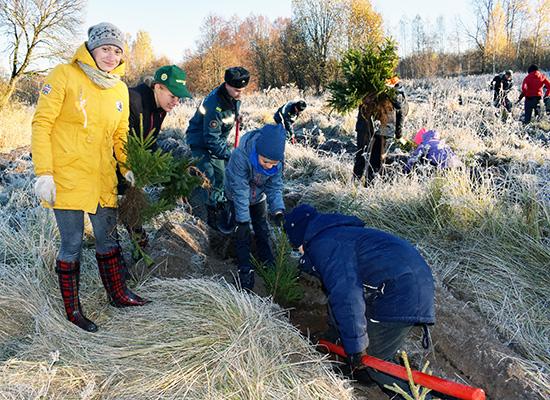 Жыхары Шуміліншчыны далучыліся да рэспубліканскай акцыі «Чысты лес-2018»