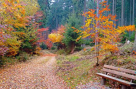 Акция «Чистый лес» приглашает всех желающих делать уборку в лесу