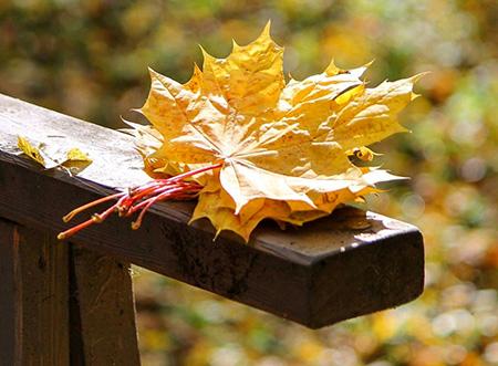 С чем к тебе приходит осень, расскажи…