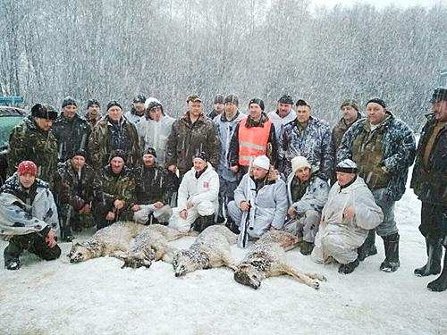 Шумилинские охотники выследили стаю волков