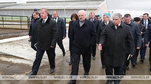 Лукашенко поручил снять с должностей всех виновных в ненадлежащих условиях хозяйствования в агрохолдинге «Купаловское»