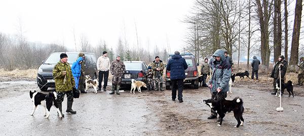 Выставка собак охотничьих пород прошла в Шумилино