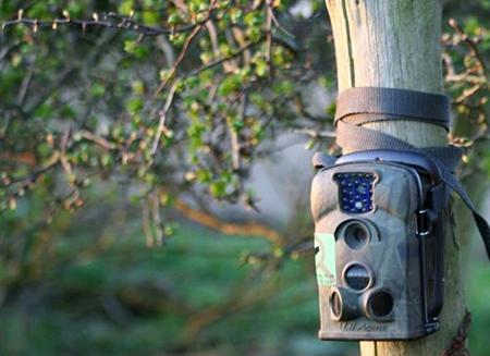 Сёлета фотапасткамі Шумілінскага лясгаса зафіксавана 15 выпадкаў парушэнняў